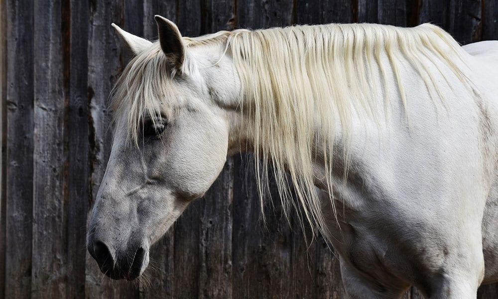 Buying Horse