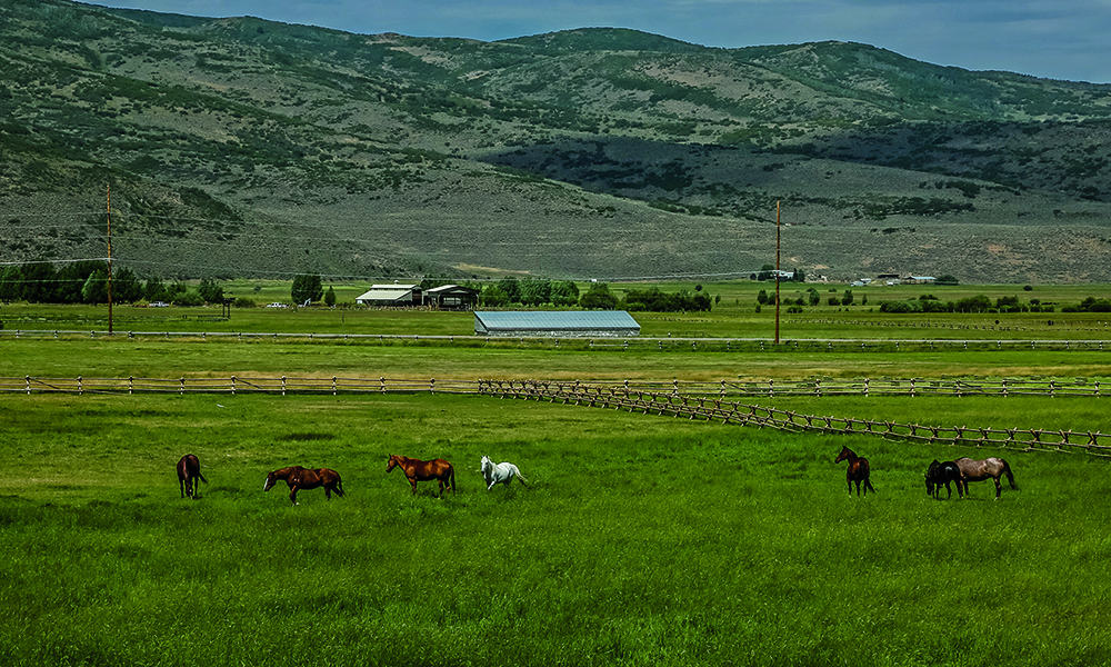 horses in a field mountains park city utah