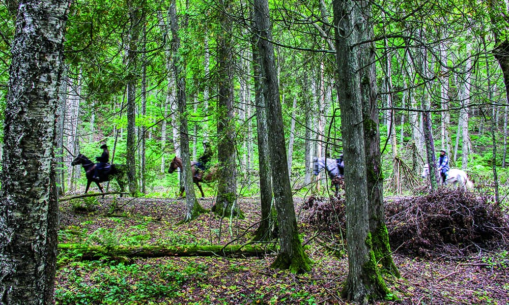 woods forest horse riding trails mackinac island michigan cowgirl magazine