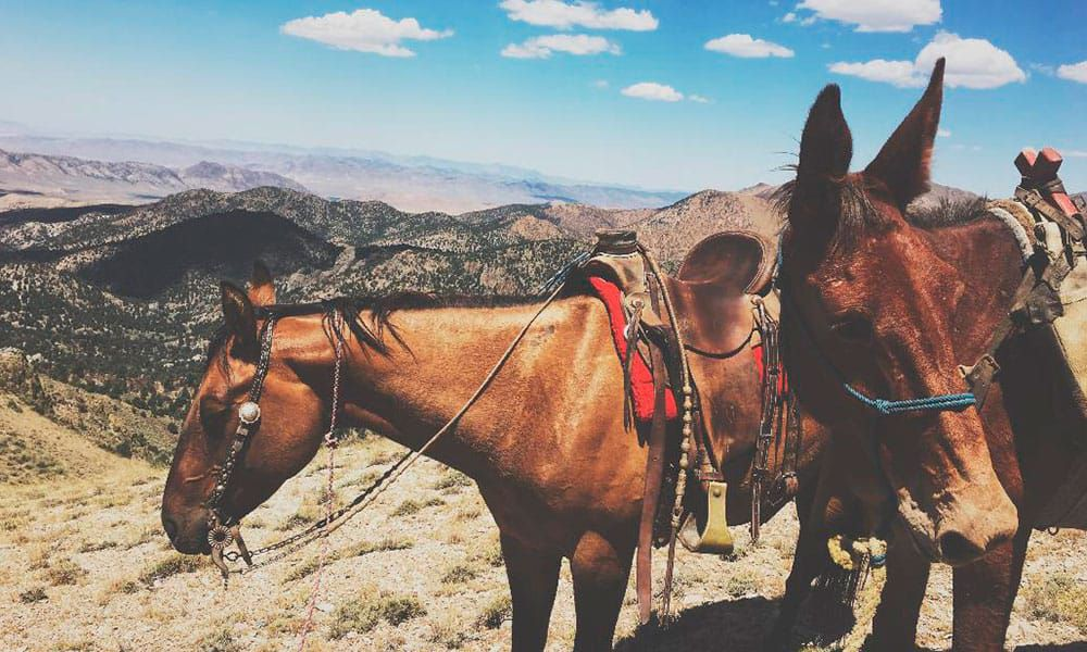 horse ceily rae highberger cowgirl magazine