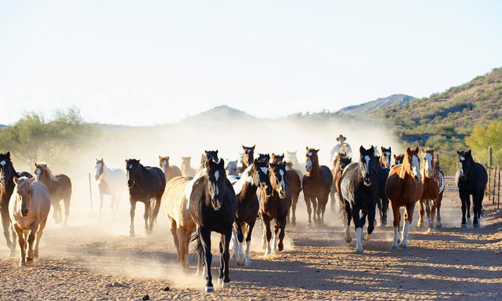 Rancho De Los Caballeros Wickenburg Arizona Cowgirl Magazine