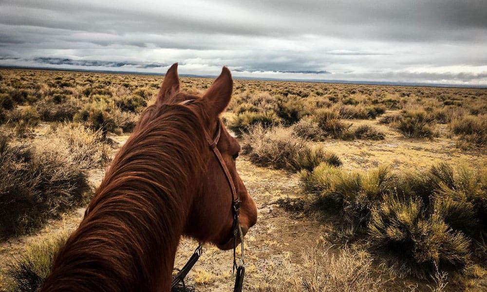 Horse looking off onto a desert landscape