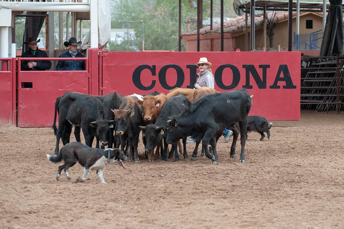 art of the cowgirl cowdog demonstration cowgirl magazine