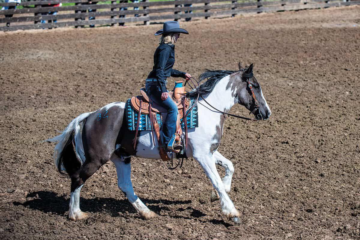 cowgirl cadillacs willie paint draft cross stephanie barnette cowgirl magazine