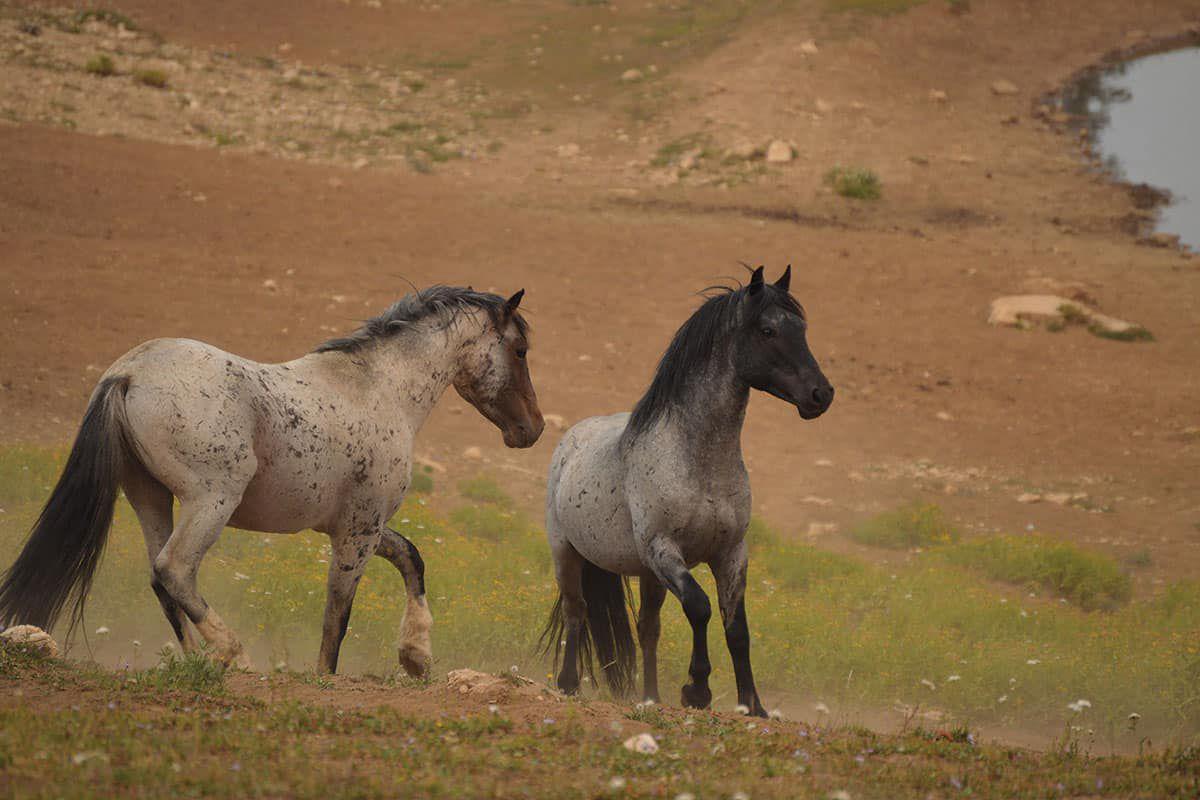 pryor mountain horses cowgirl magazine