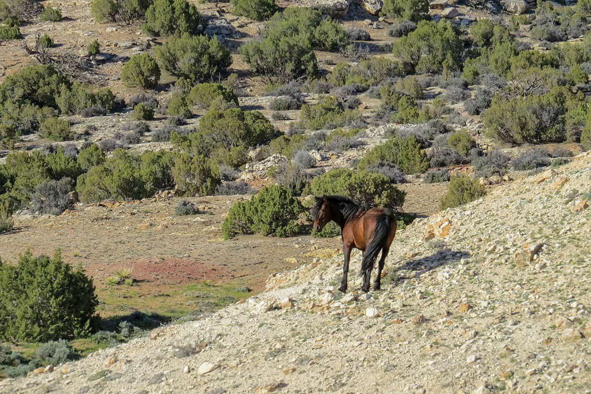 pryor mountain horse brown cowgirl magazine