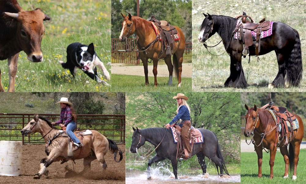 The 3rd Annual League of Legends Invitational Horse & Stock Dog Sale is September 6-7, 2019 in Livingston, MT.