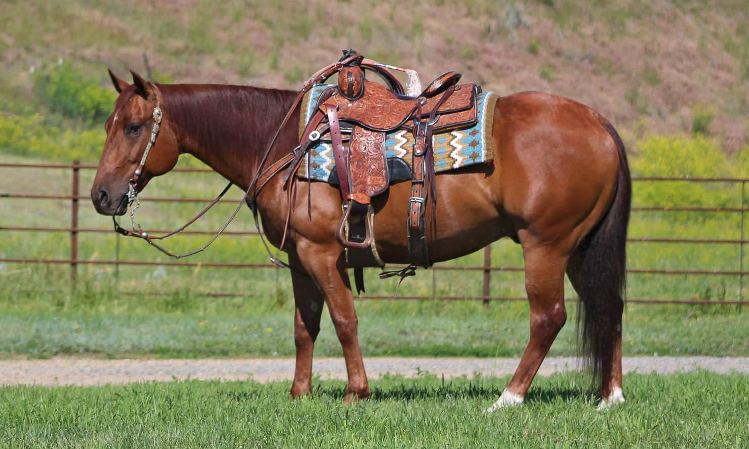 Tuit is one of the horses for sale at the League of Legends Horse Sale.