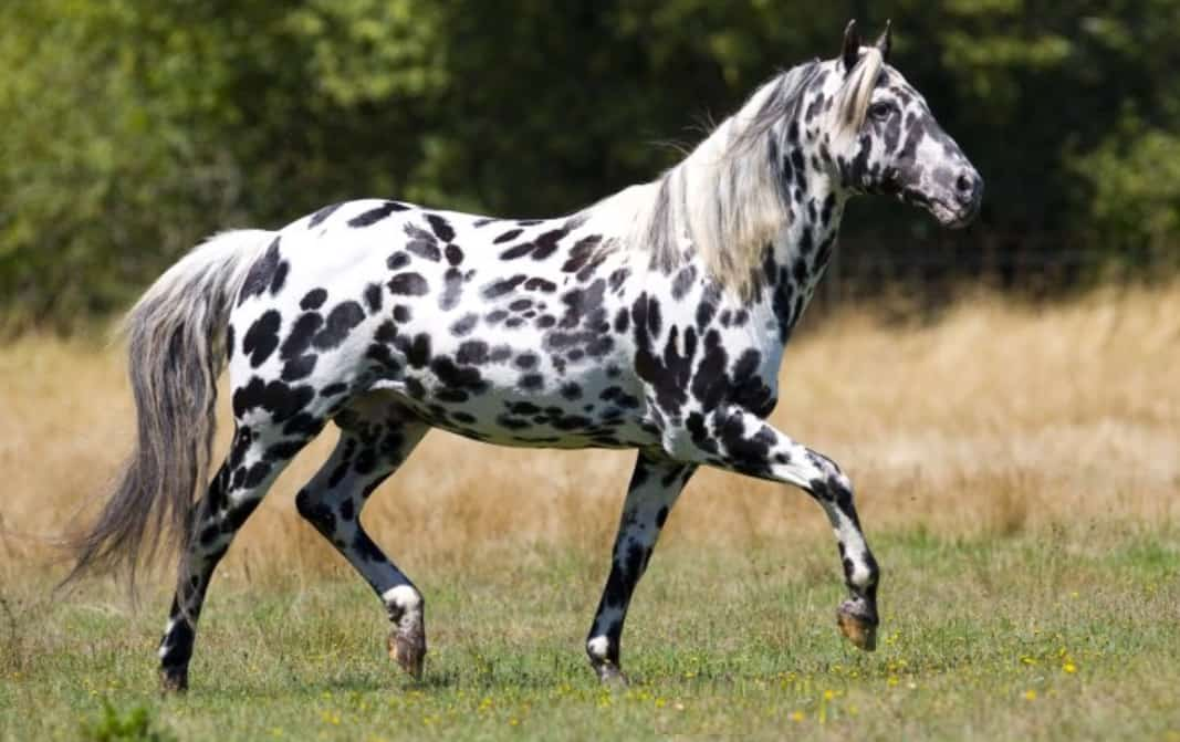 Rare Beautiful Horse Markings Cowgirl Magazine