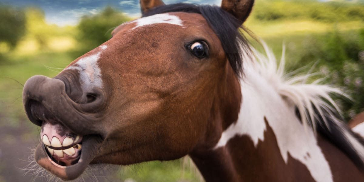 Celebrate Your Horse's Birthday cowgirl magazine