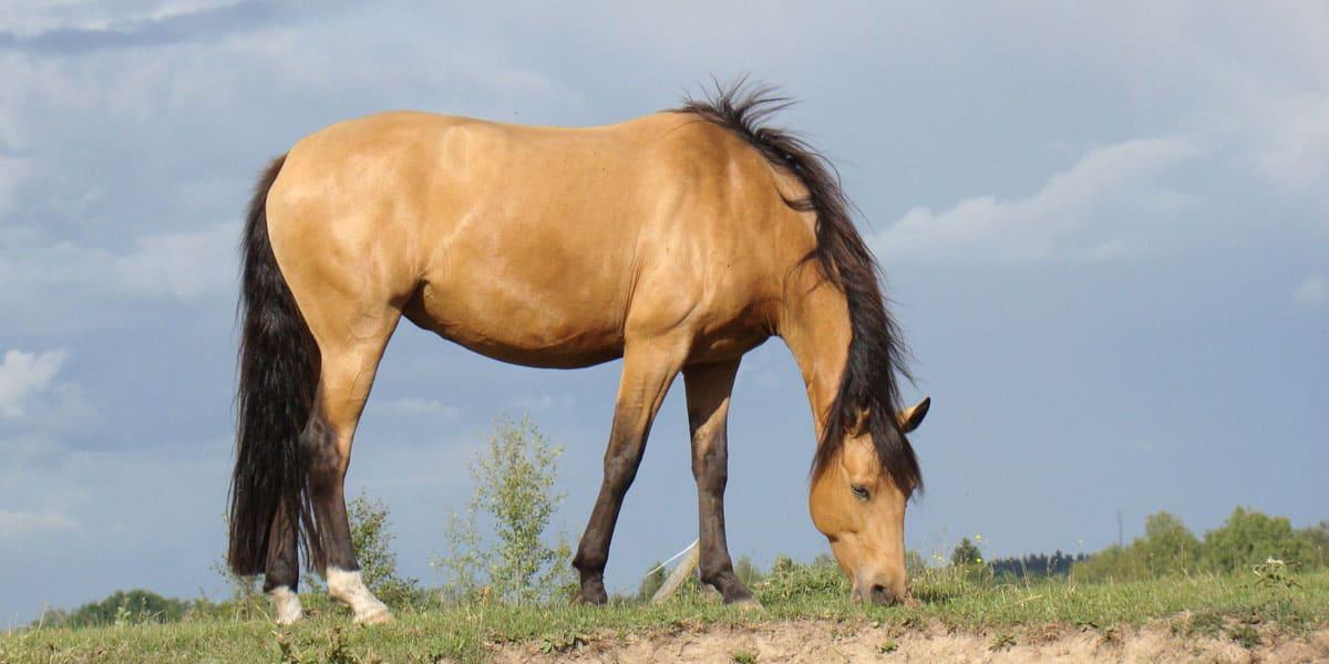 Buckskin horse cowgirl magazine