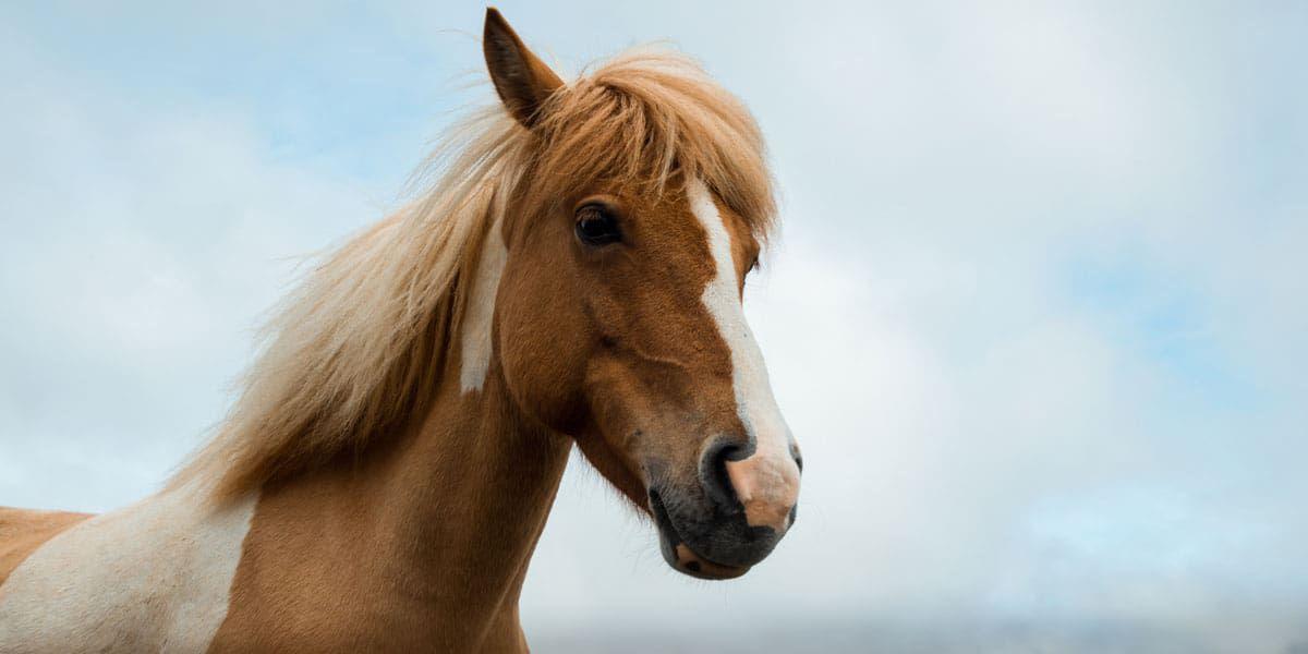hot horse cowgirl magazine
