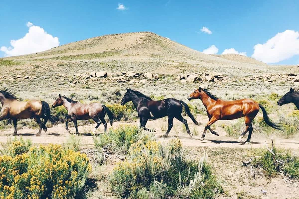 running horses in field diy bug spray cowgirl magazine
