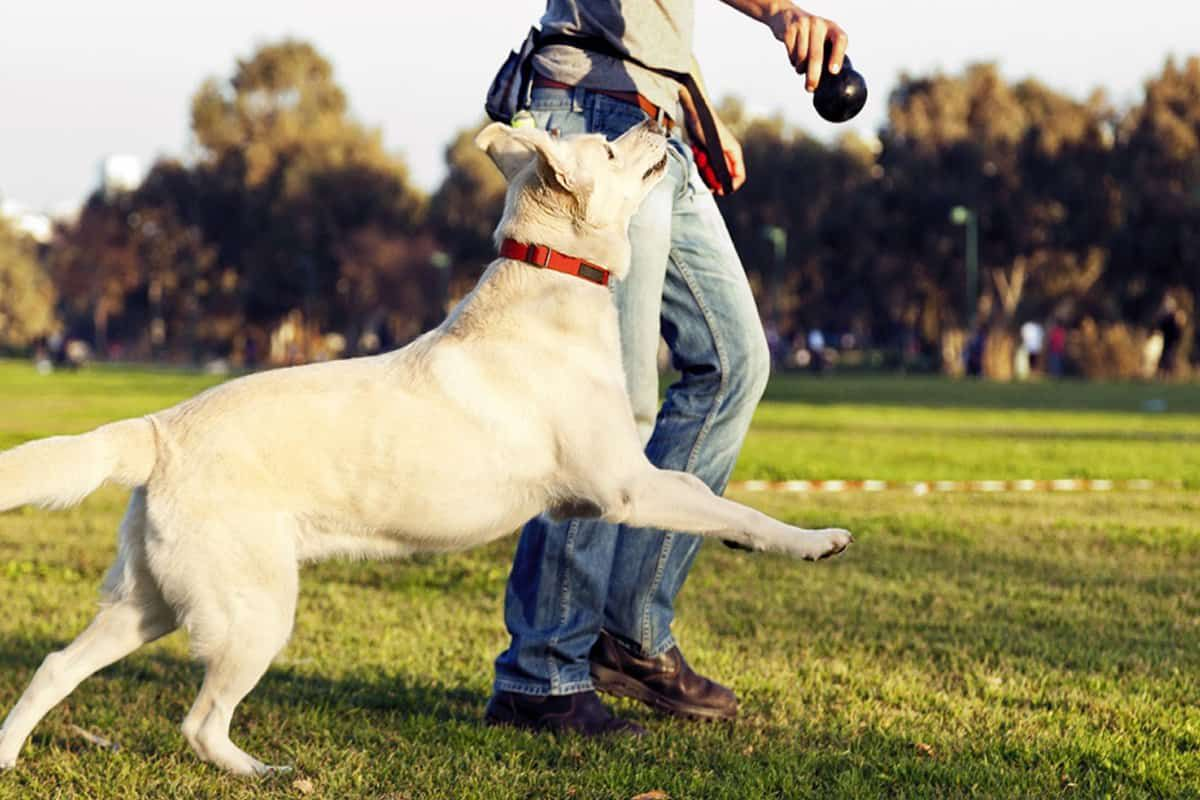 dog jumping for ball cowgirl magazine