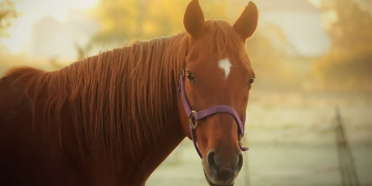 Retired racehorse cowgirl magazine
