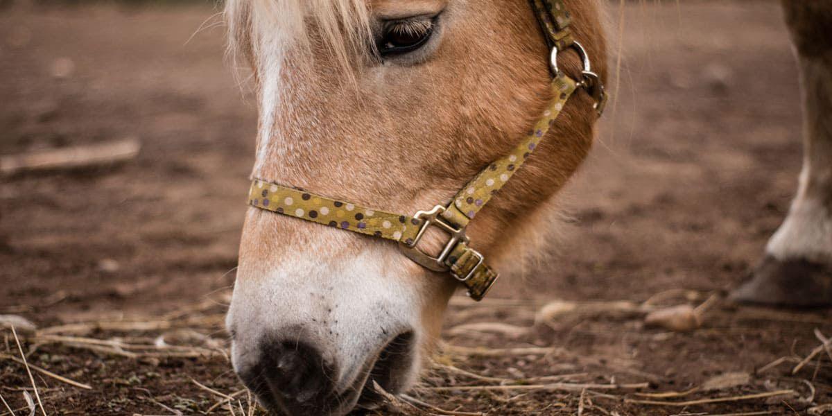 Underweight horse cowgirl magazine