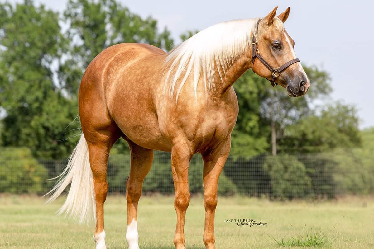 cowgirl cadillacs horse sale cowgirl magazine