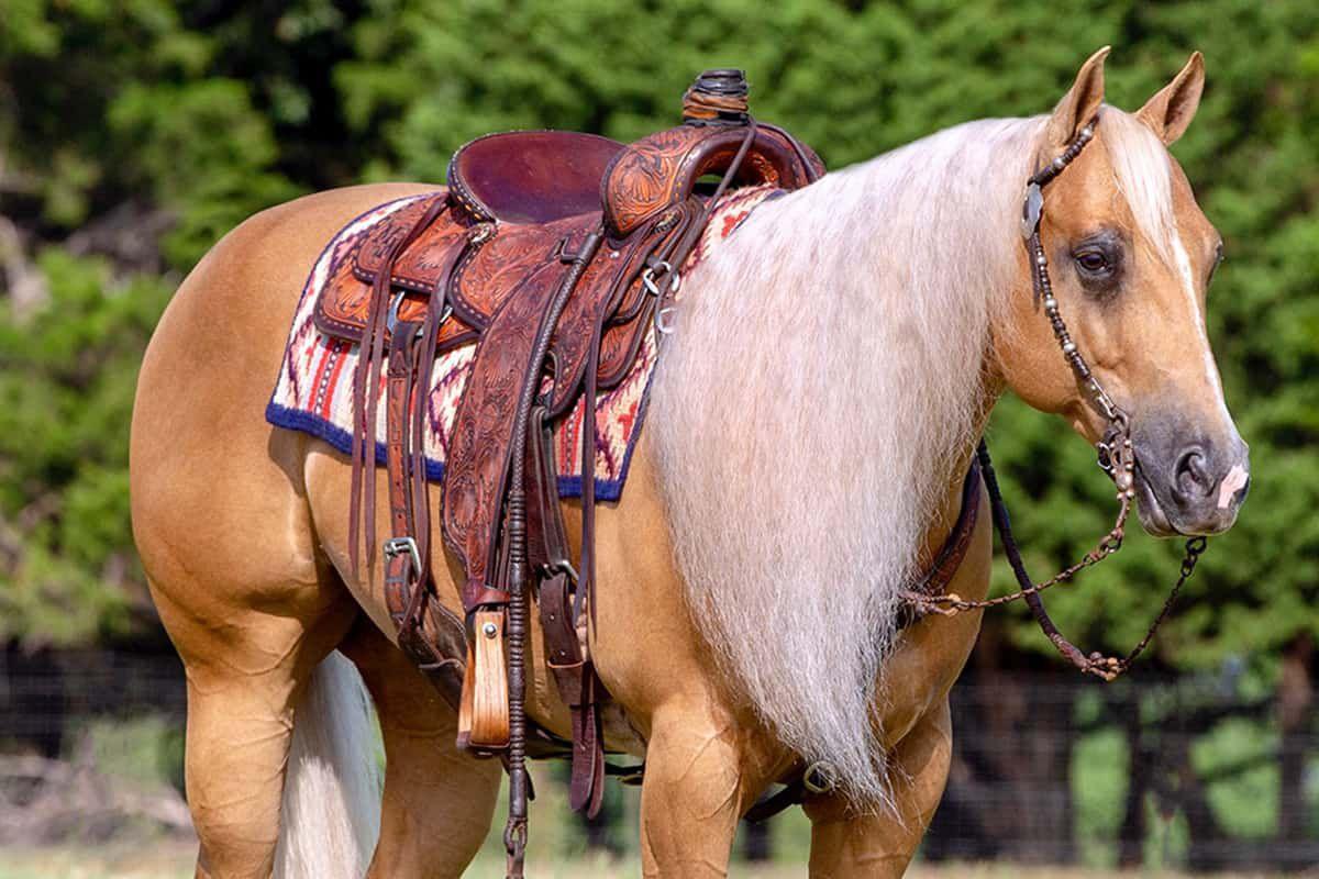 cowgirl cadillacs magic cowgirl magazine