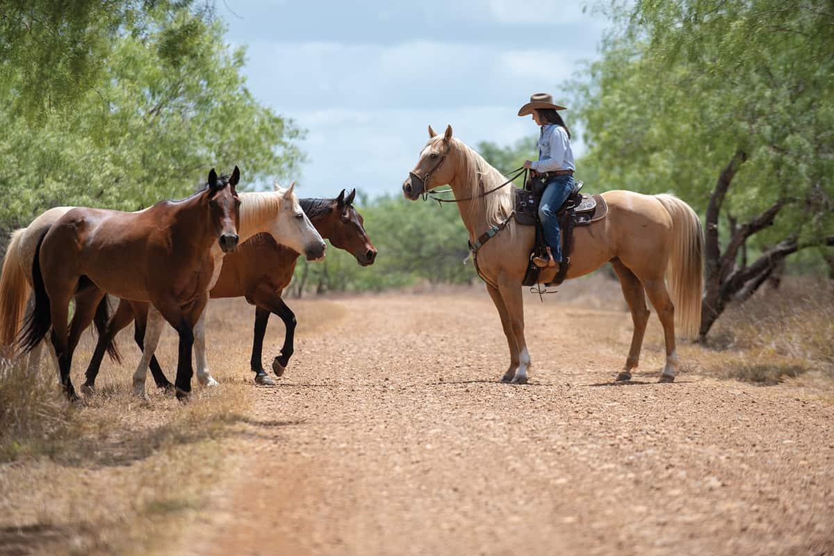 barrel horse breeding cowgirl magazine