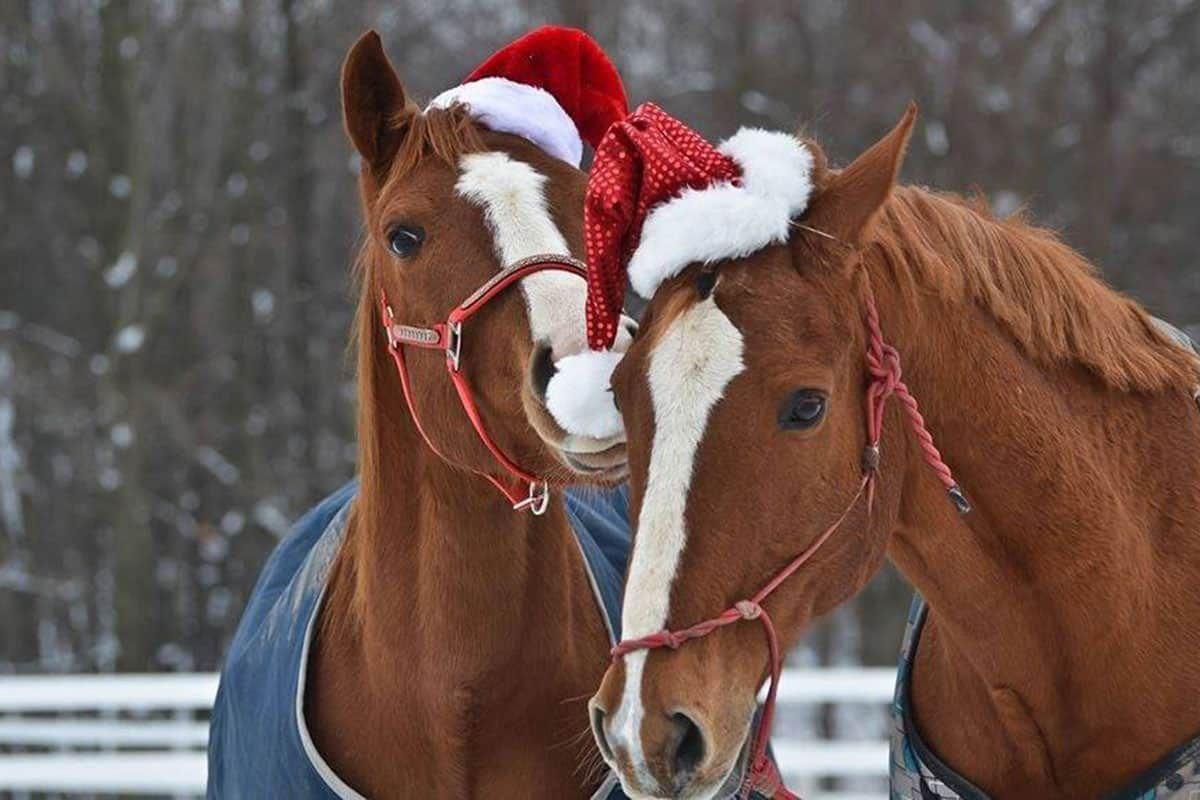 christmas horse treats