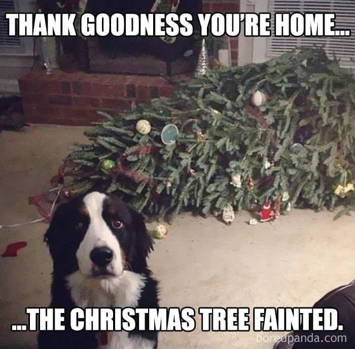 christmas memes cowgirl magazine