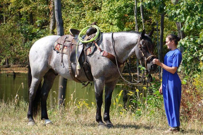 blue chip investment cowgirl cadillacs horse sale cowgirl magazine