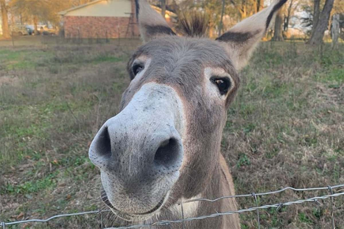 donkeys cowgirl magazine