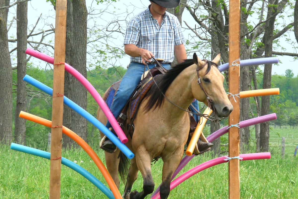 Stay Busy With These Diy Horse Projects Cowgirl Magazine