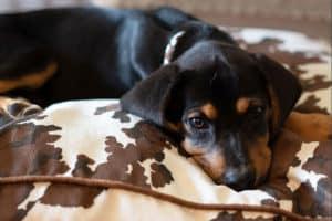 Dog Bed Cowgirl Magazine