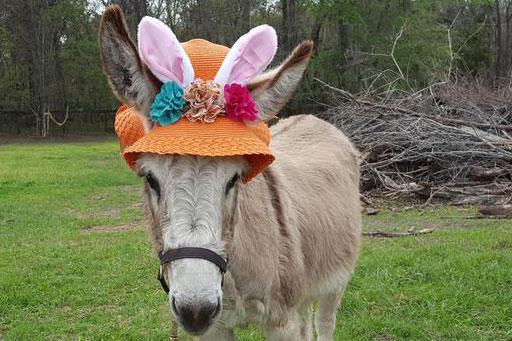 Easter Donkey Cowgirl Magazine