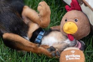 MuttNation Toy Cowgirl Magazine