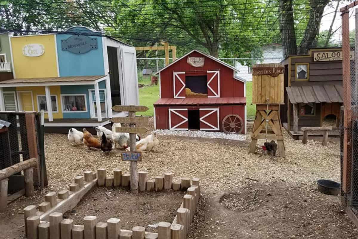 chicken coop cowgirl magazine