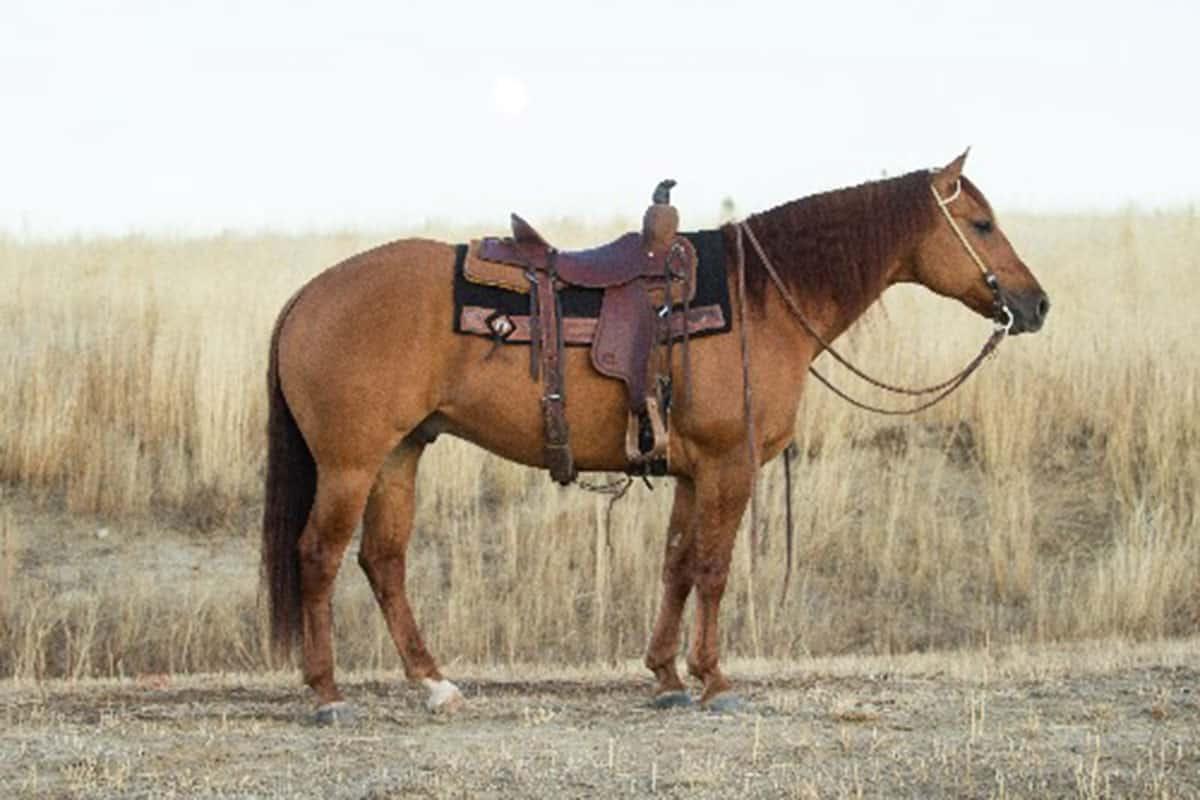 meet the horses of diamond-mcnabb cowgirl magazine