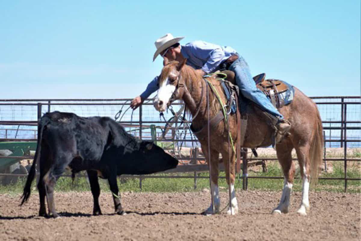 horse sale cowgirl magazine