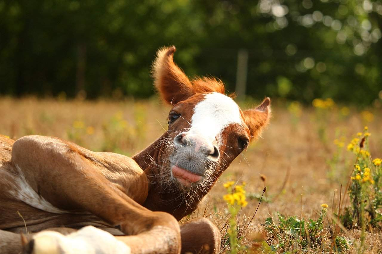 sleeping foal cowgirl magazine