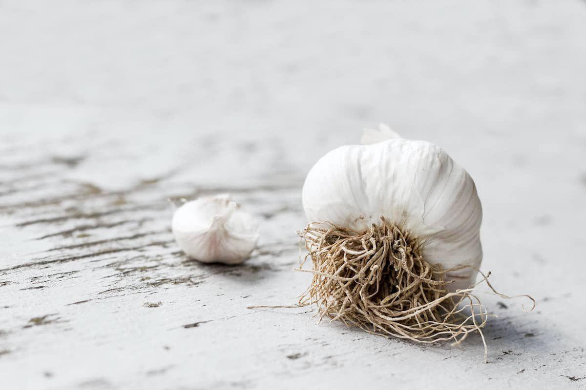 garlic cowgirl magazine