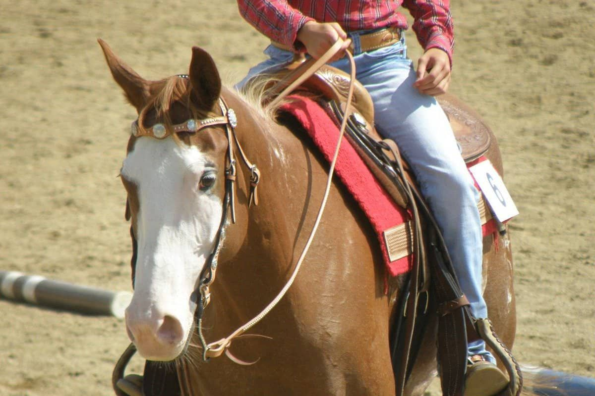 Virtual horse shows