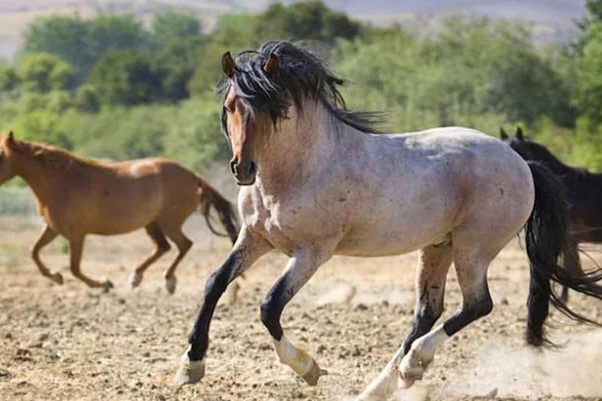 Freedom Wild Horse Cowgirl Magazine