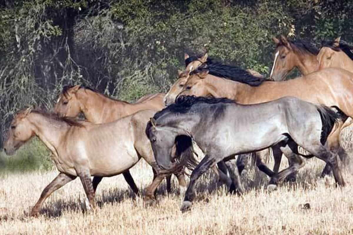 Sulphur Springs Wild Horses Cowgirl Magazine