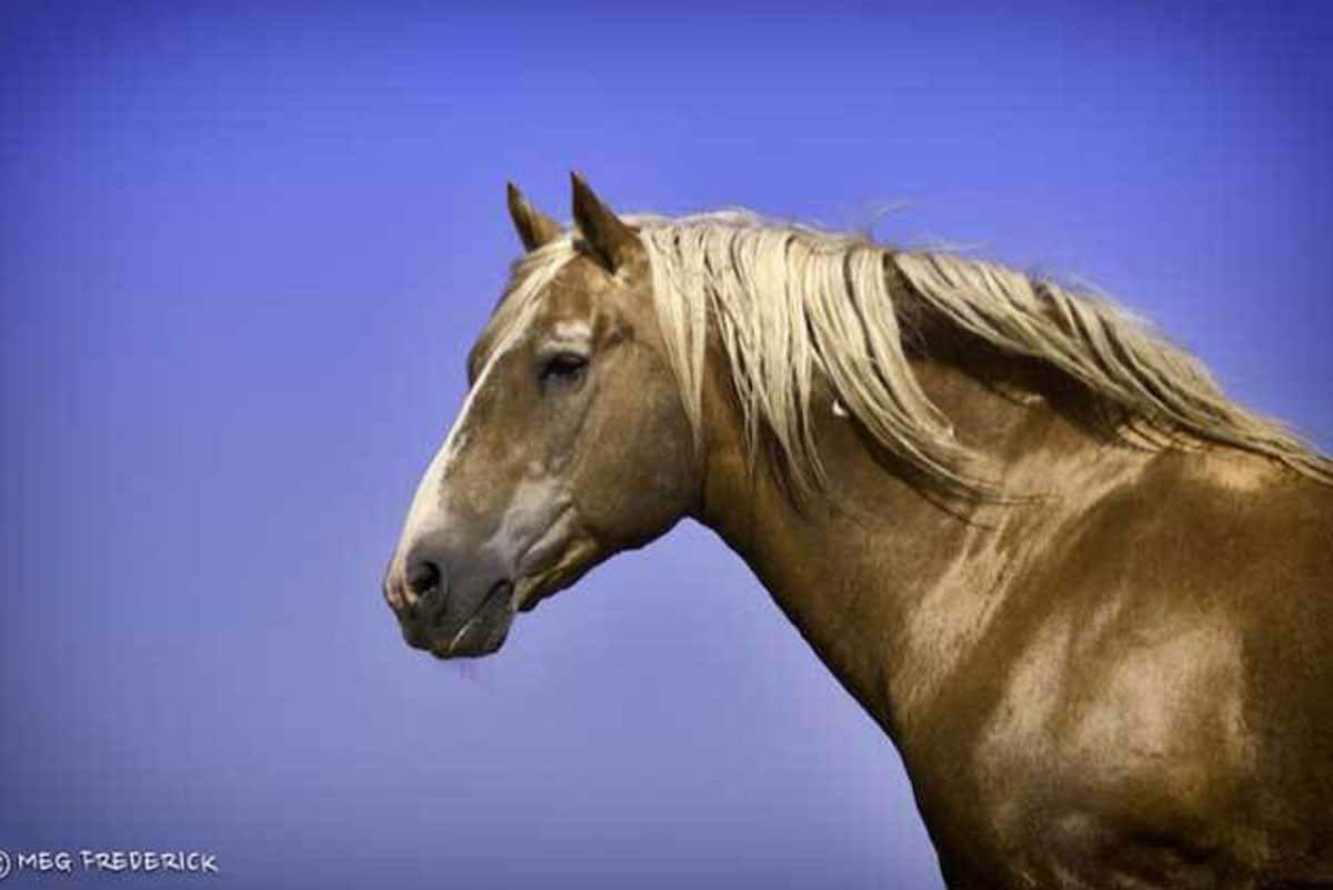 Sutter Wild Horse Cowgirl Magazine