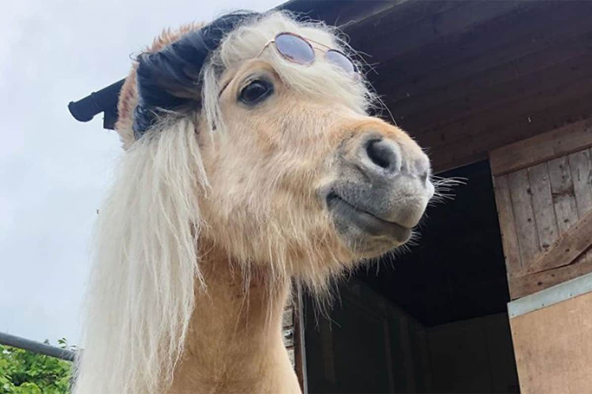 Teddy the Shetland quarantine cowgirl magazine
