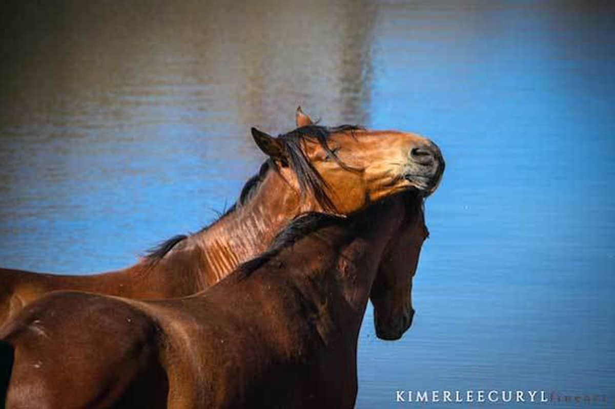 Virgina Range Wild Horses Cowgirl Magazine