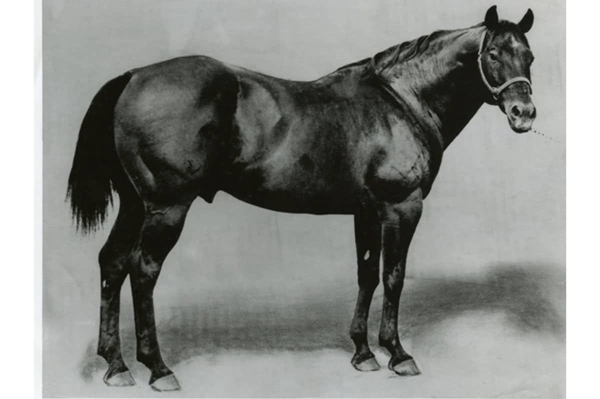 all-american horses quarter horse cowgirl magazine