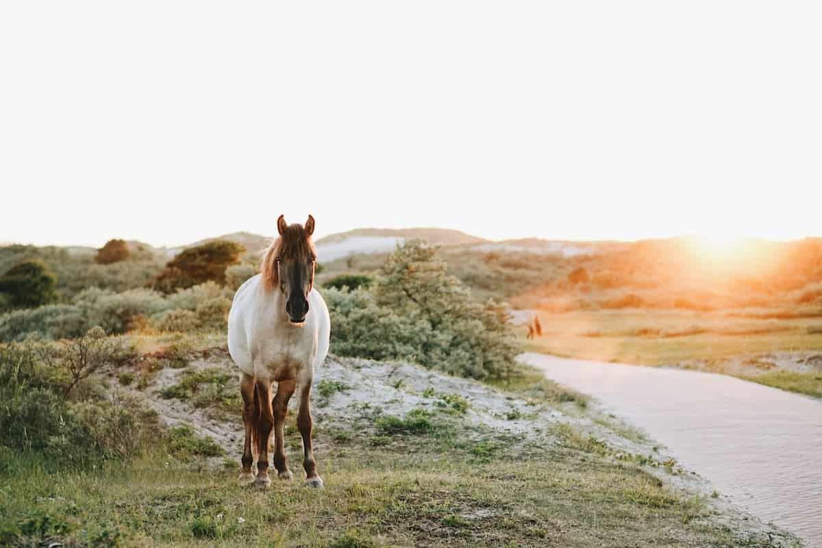 spirit animal horse cowgirl magazine