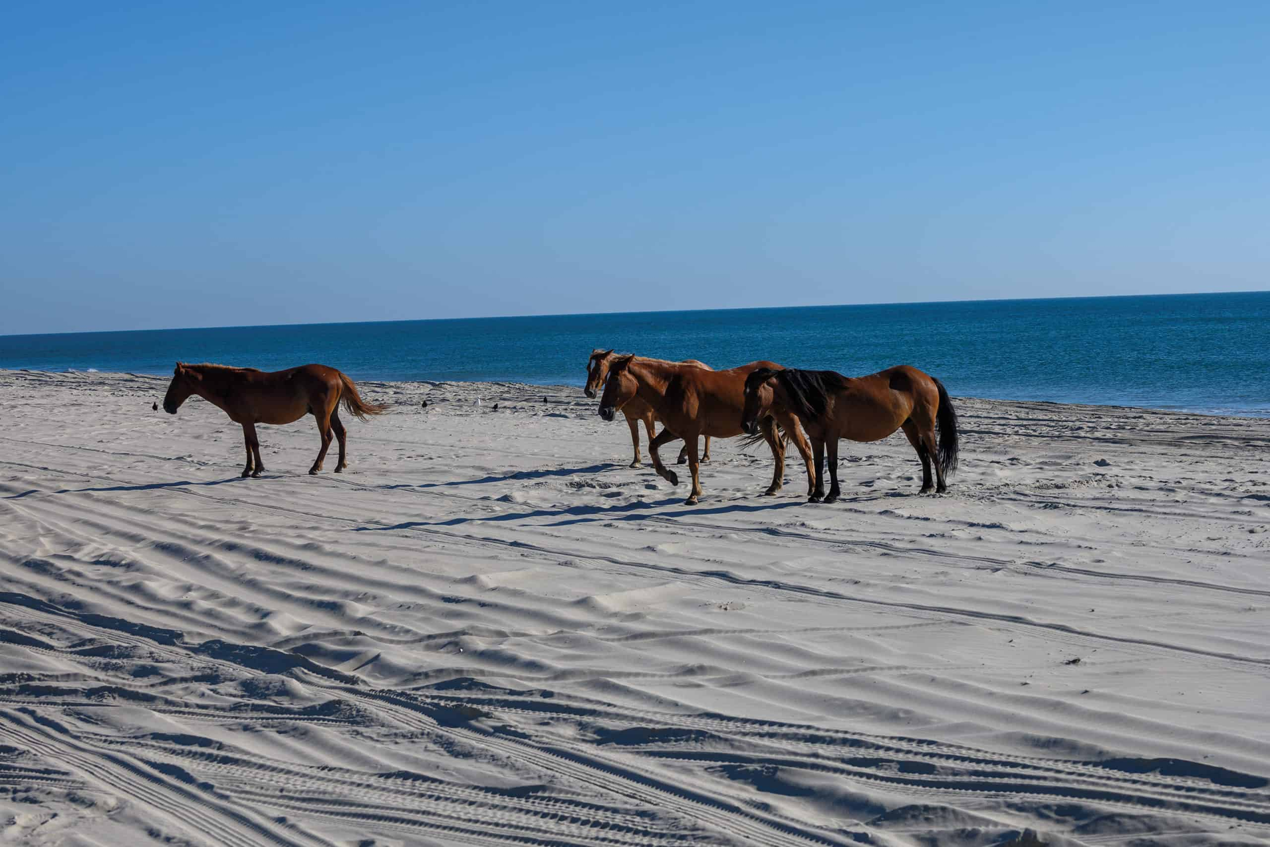 corolla horses cowgirl magazine