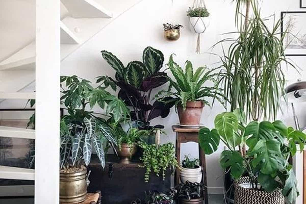 pet friendly house plants Cowgirl Magazine
