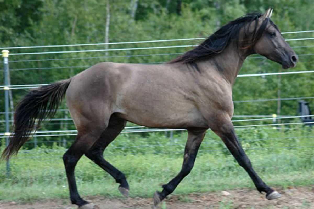 all-american horses missouri fox trotter cowgirl magazine