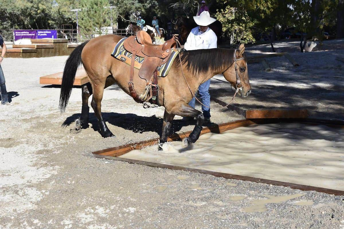 water crossing cowgirl magazine