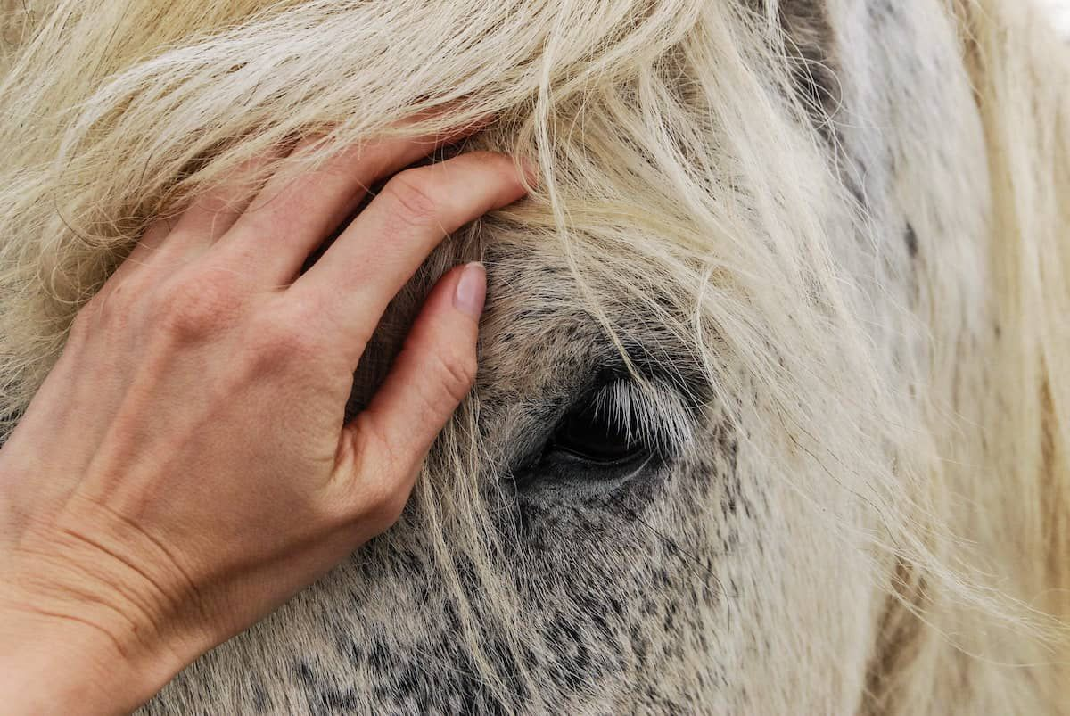horse bond cowgirl magazine