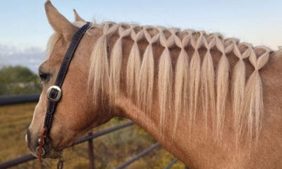 horse hairstyle cowgirl magazine